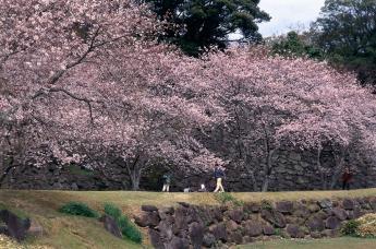 Nagoya Castle Ruins and Nagoya Castle Museum