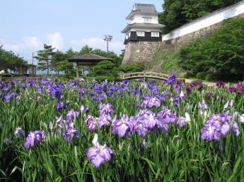 Omura Flower Festival