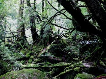 Yaku Island Nature Experience Tour