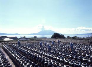 Black Vinegar Making Field Trip at Kurozu Information Center Tsubobatake…
