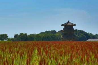 Kikuchi Castle