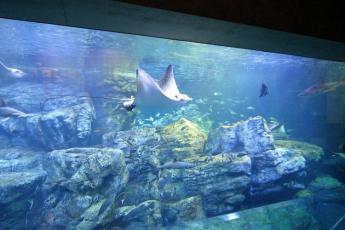 """Oita Marine Palace Aquarium """"Umitamago"""""""