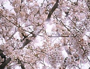 Kiyomizu Park