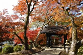 Autumn Leaves at the Akizuki Castle Ruins