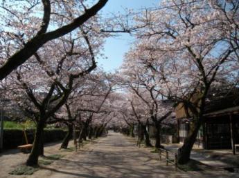 Akizuki (Sugi no Baba Street)