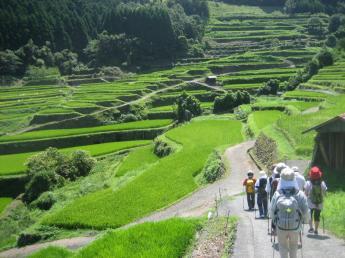 Tsuzura Terrace Fields