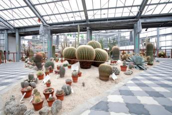 Saboten House (Cactus House)
