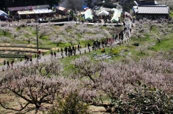 Yume Tachibana Plum Blossom Viewing Festival