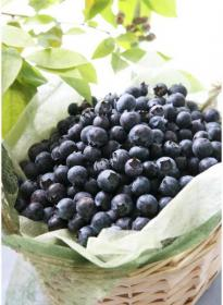 Blueberryno-mura (Blueberry Village)
