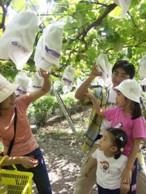 Tanushimaru Kanko Budoen (Tanushimaru Grape Gardens)…