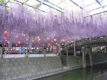 Nakayama O-fuji Matsuri (Nakayama Great Wisteria Festival)…