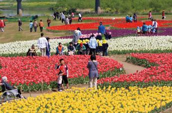 Nogata Tulip Fair