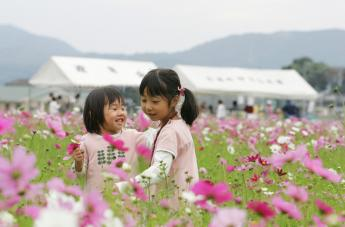 Fukuchi Town Cosmos Festival