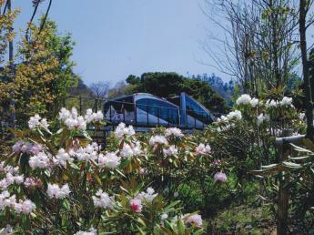 Mt. Hiko Flower Garden
