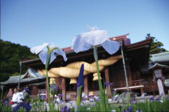 Miyajidake Jinja Shobu (Iris) Flower Festival