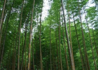 Kyushu Olle, Kurume Korasan Course