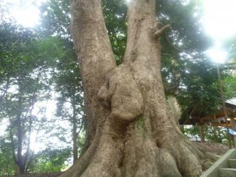 Moomin Tree