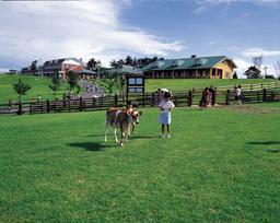 Takachiho Pasture